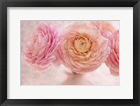 Framed Pink Persian Buttercup Bouquet