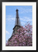 Framed Eiffel Tower with Pink Magnolia Tree