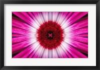 Framed Purple Bloom
