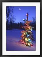 Framed Bright Tree in Snow