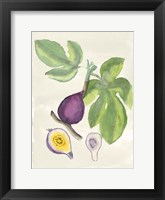 Framed Watercolor Fruit I