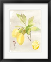 Framed Watercolor Fruit II