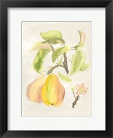 Framed Watercolor Fruit III