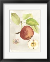 Framed Watercolor Fruit IV