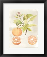 Framed Watercolor Fruit V