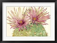 Framed Cactus Blossoms I