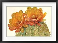 Cactus Blossoms II Framed Print
