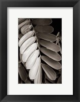 Framed Tropical Plant I