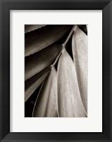 Tropical Plant II Framed Print