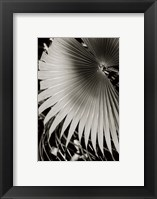 Palm Frond II Framed Print
