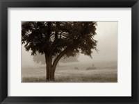 Framed Calm Mist no Limb