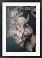 Framed Dark Orchid I
