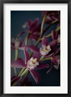 Framed Dark Orchid III