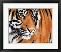 Framed Tiger Crop