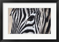 Framed Zebra Eyes
