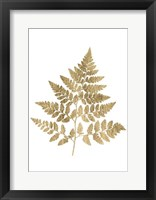 Framed Graphic Gold Fern I