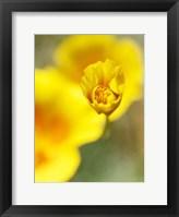 Framed California Poppy III