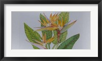 Framed Exotic Flowers II