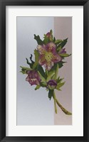 Flower Repose I Framed Print