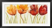 Row of Tulips I Framed Print