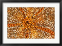 Framed Orange Star - N. Sulawesi, Indonesia