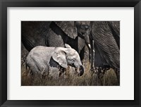 Framed Baby Elephant I