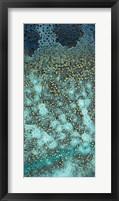 Framed Caribbean - B