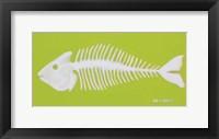 Framed Fish Bones
