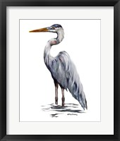 Framed Blue Heron with White Back