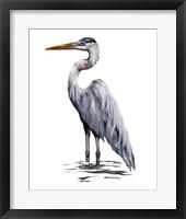 Framed Blue Heron with White Back