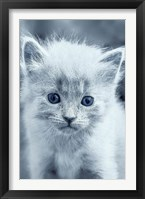 Framed Blue Kitty