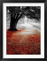 Framed Autumn Contrast