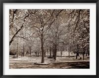 Framed Cherry Tree Park