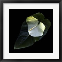 Framed Anthurium 1