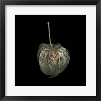 Framed Filigree - A Jewel, Physalis