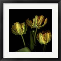 Framed Golden Parrot Tulips