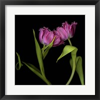 Framed Pink Tulips 1