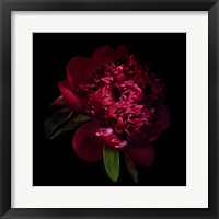 Framed Red Peony 1