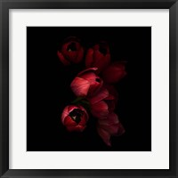 Framed Red Tulips 4