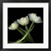 Framed Yellow White Tulips 2