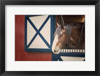 Framed Patriotic Pony I