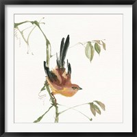 Framed Mountain Bush Warbler