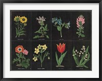 Botanical on Black Chart I Framed Print