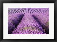 Framed Rolling Hills of Purple