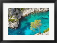 Framed Tree on Turquoise Waters