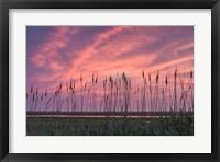 Framed Marsh Reeds