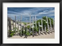 Framed White Beach Roses