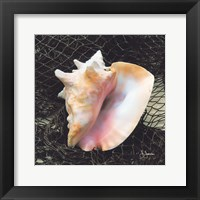 Framed Conch with Net