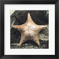 Framed Starfish with Net