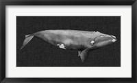 Inverted Whale II Framed Print